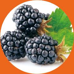 share original Maulbeerfrucht im Kräutermantel