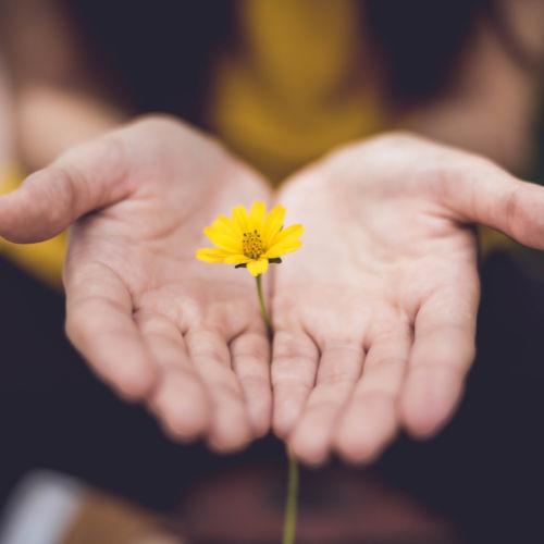 Geschenk Hand mit Blume Share Original